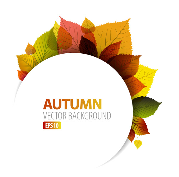 600x594 Design Vector Graphics Autumn Leaf 1 Free Vector 4vector