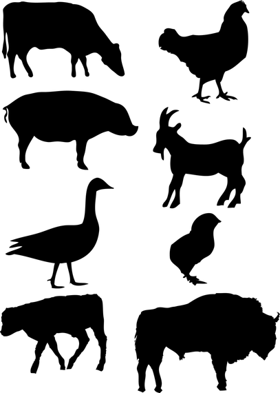 407x570 Farm Animals Vector Graphics