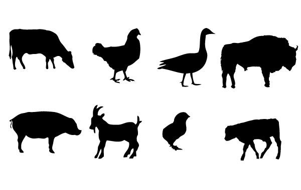 600x380 Farm Animals Vector Graphics