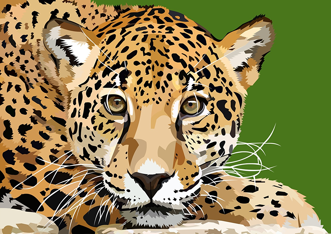 1280x904 Wallpaper Leopards Snout Animals Staring Painting Art Vector