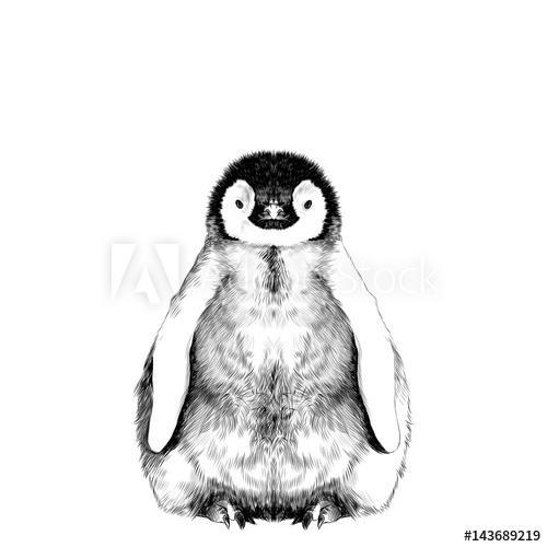 500x500 Baby Penguin Small And Cute Is In Full Growth Is Symmetrical, The