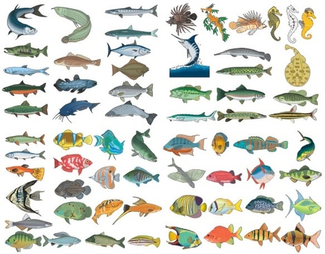 470x368 Fish Free Vector Fish Free Vector Download 992 Free Vector For