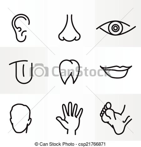 450x470 Parts Of Body Drawing Notes Photography Gallery Sites With Parts