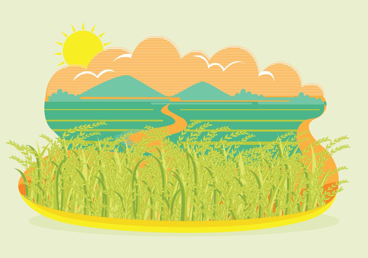 1400x980 Rice Field Free Vector Art