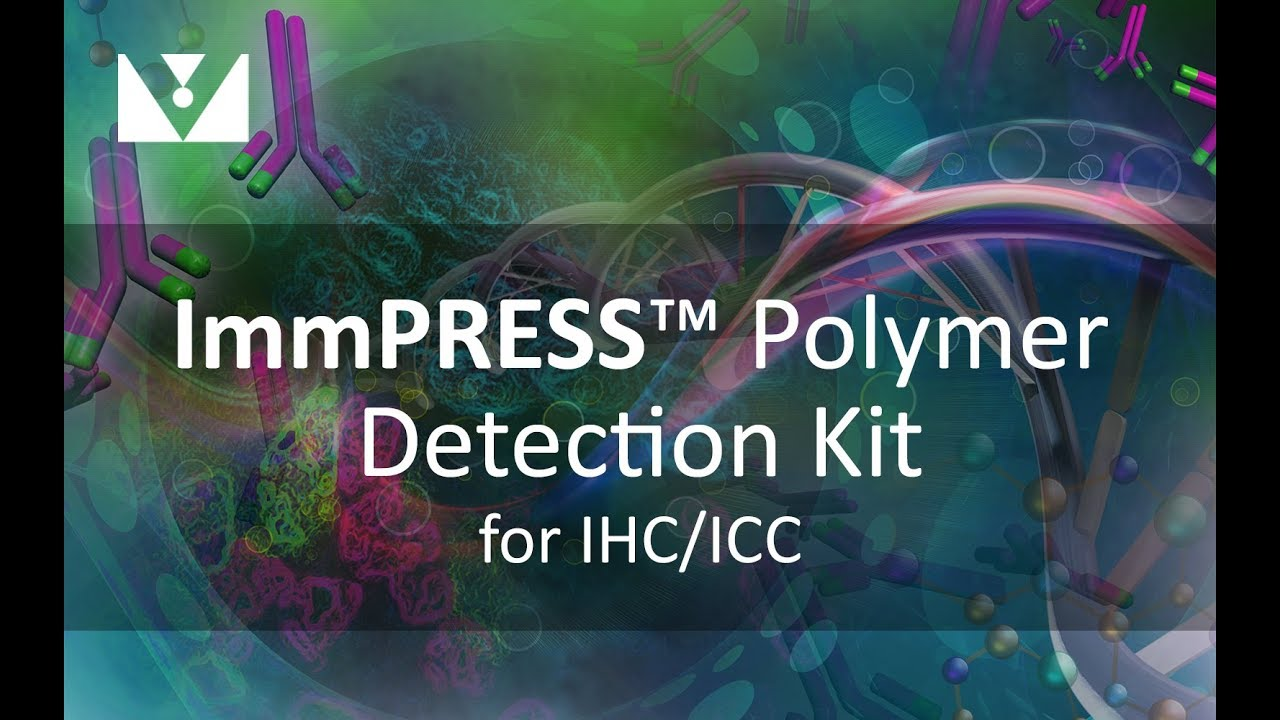 1280x720 Detection With Immpress Polymer Kit From Vector Laboratories