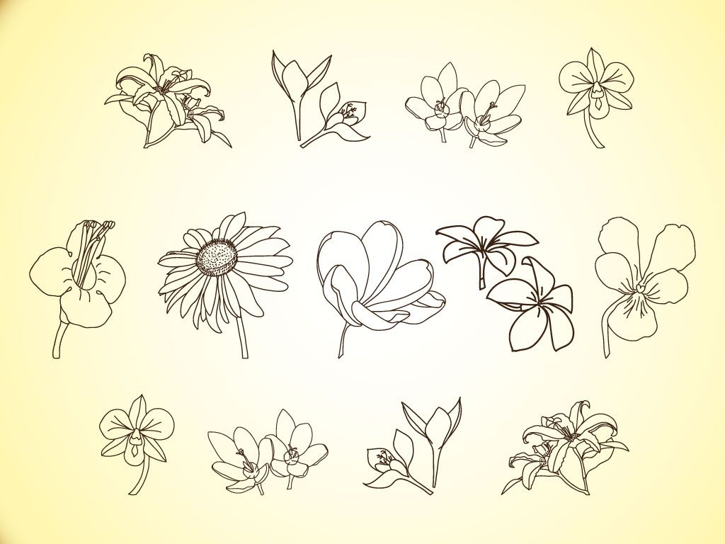 1024x768 Free Simple Line Drawings Vector Flower Line Illustrations