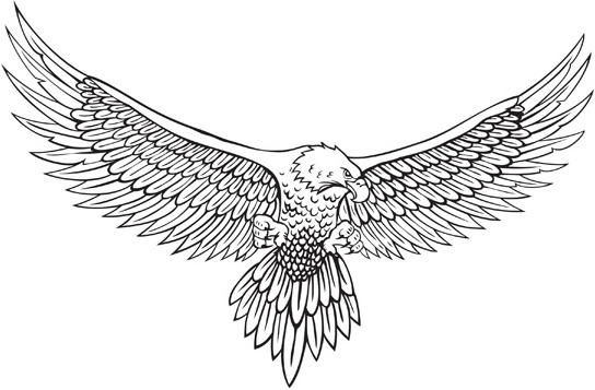 544x357 Vector Line Drawing Of The Eagle Free Vector In Encapsulated