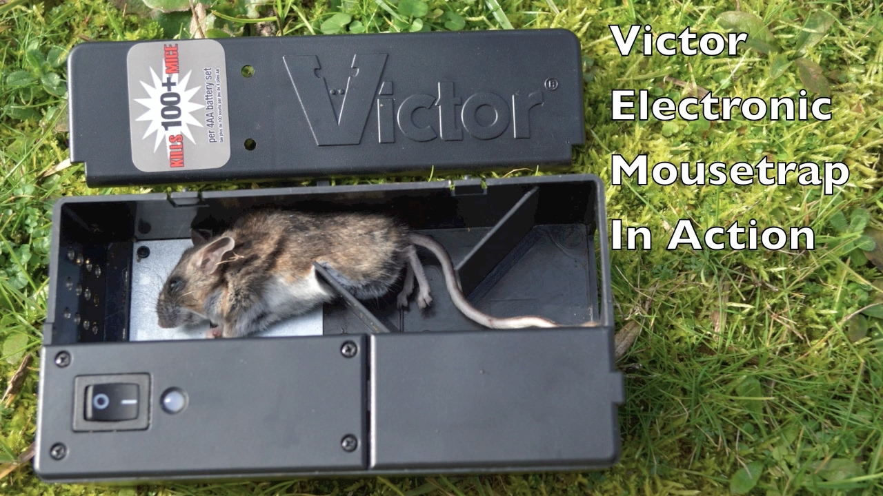 1280x720 Victor Electronic Mouse Trap In Action With Motion Cameras