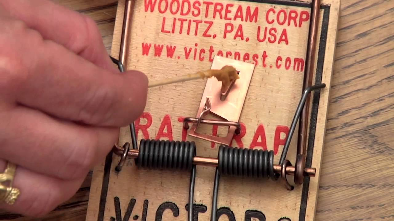 1280x720 Victor Metal Pedal Rat Trap Instructional Video