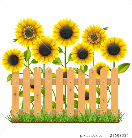 450x468 Vector Wooden Fence With Sunflowers