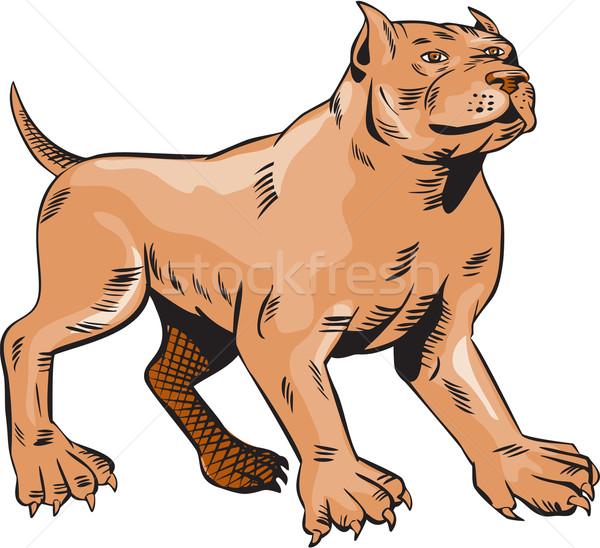 600x548 Pitbull Dog Mongrel Standing Etching Vector Illustration