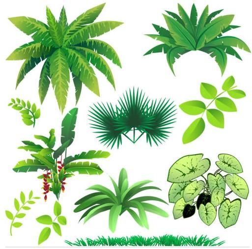 513x507 Various Jungle Plants Ai Format Free Vector Download