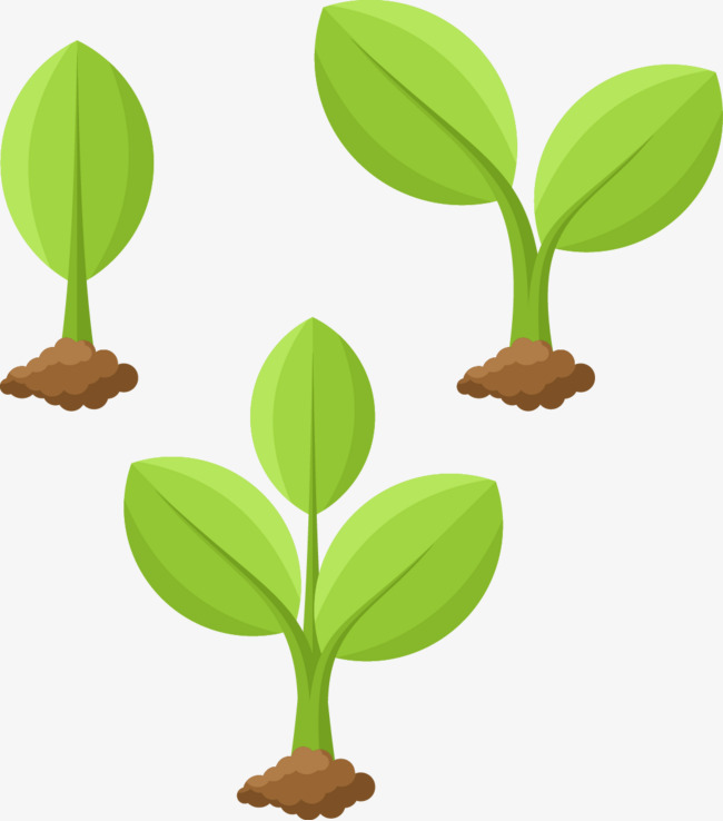 650x738 Vector Illustration Plant Growing, Plant Vector, Plant, Growing Up