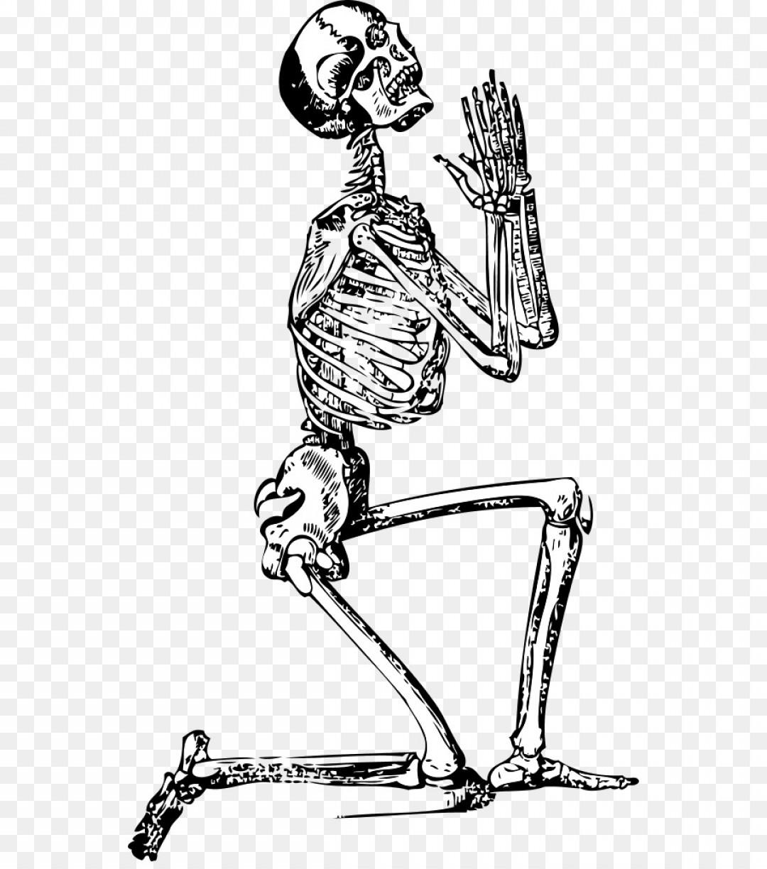 1080x1224 Png Human Skeleton Clip Art Skeleton Vector Geekchicpro