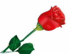 225x175 Red Rose By Donnevan Free Vector 4vector