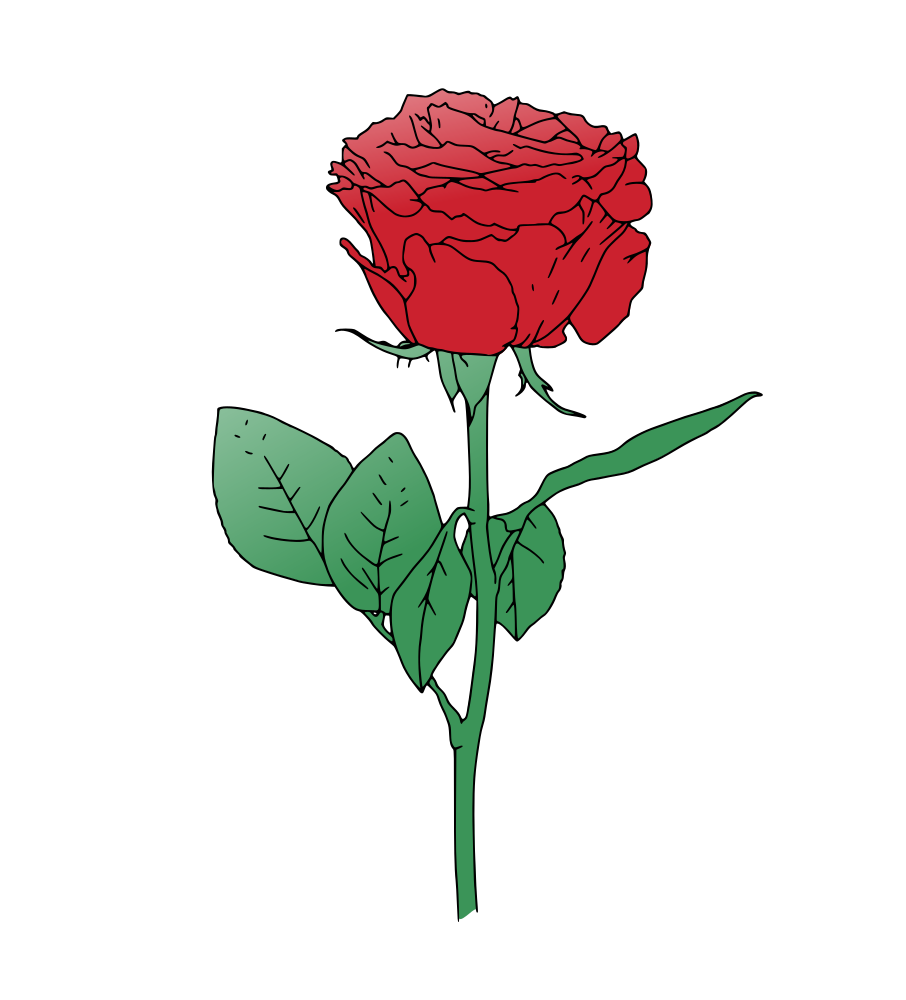 906x1000 Red Rose Clipart Vector