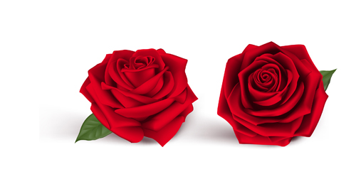 500x252 Fresh Red Rose Vector Free Download