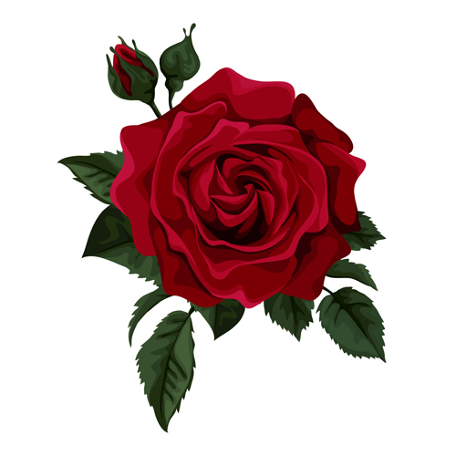 500x500 Red Rose Realitic Vector 01 Free Download