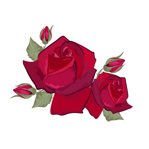 626x626 Red Roses Design Vector Free Download