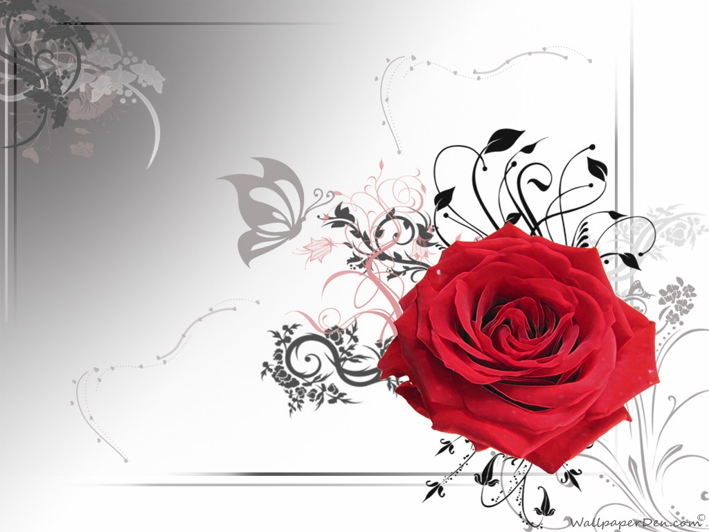 1024x768 Some Rose Photos Vector Red Rose Wedding Rose Wallpoop The