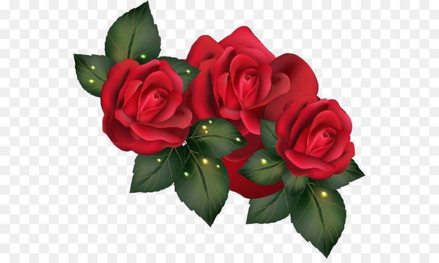 900x540 Garden Roses Centifolia Roses Beach Rose Floribunda