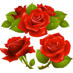300x300 Red Realistic Roses Vector