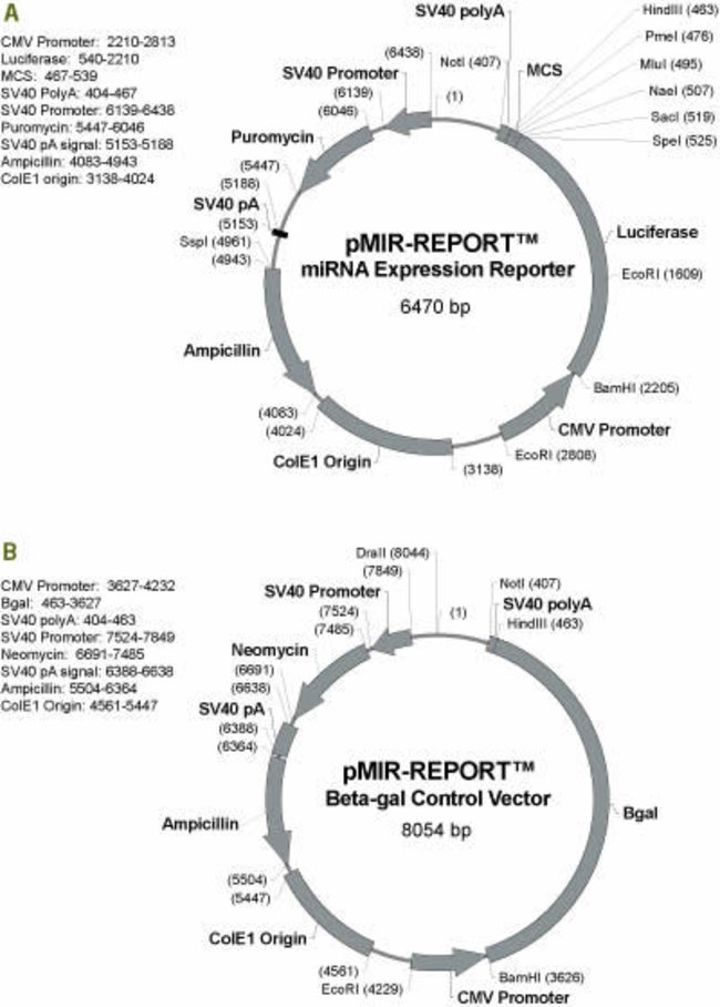 650x908 Pmir Report Mirna Expression Reporter Vector System