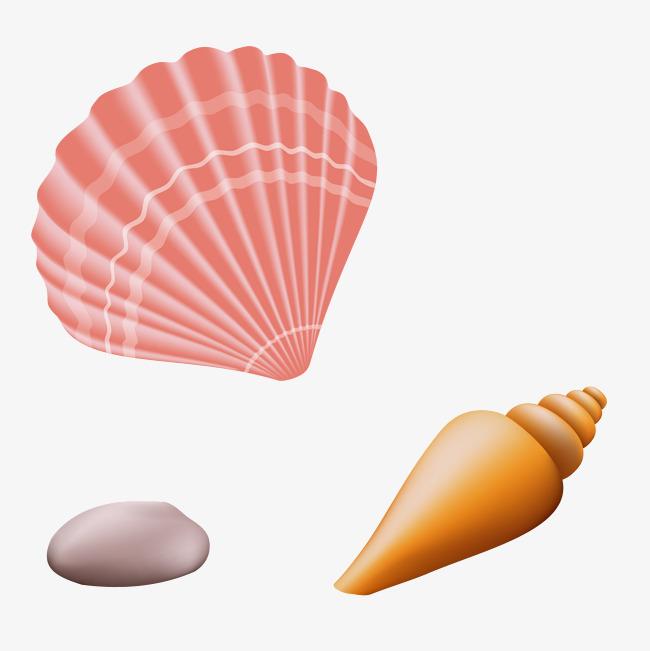 650x651 Beach Shell Conch Vector, Beach Vector, Shell Vector, Beach Shell