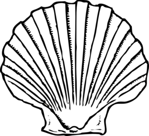 298x273 Collection Of Free Seashell Vector. Download On Ubisafe