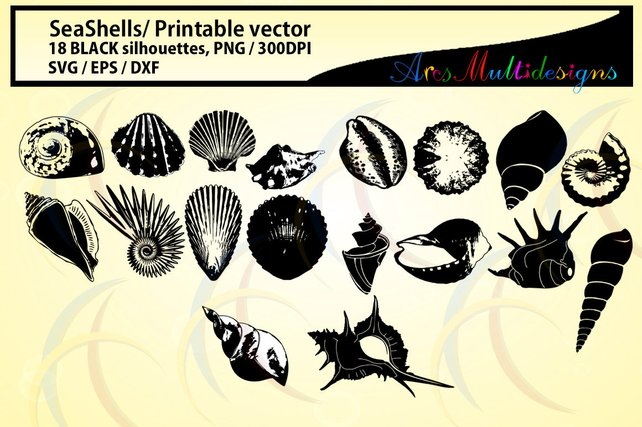 642x427 Seashells Silhouette Sea Shell Svg Eps Dxf Vector Sea Etsy