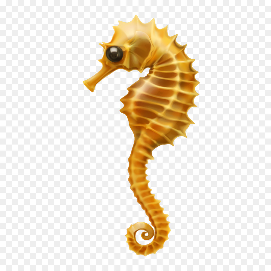900x900 Seahorse Clip Art