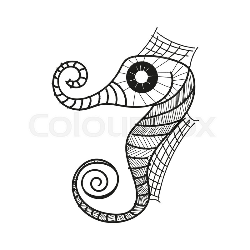 800x800 Seahorse Drawing Vector Illustration On White Background Stock