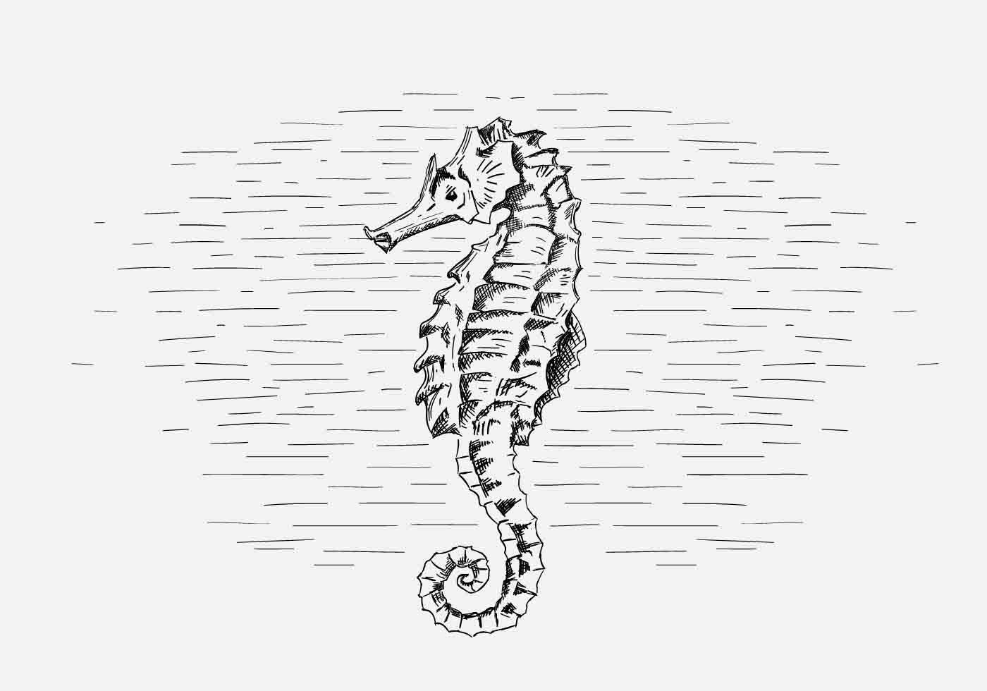 1400x980 Vector Seahorse Illustration