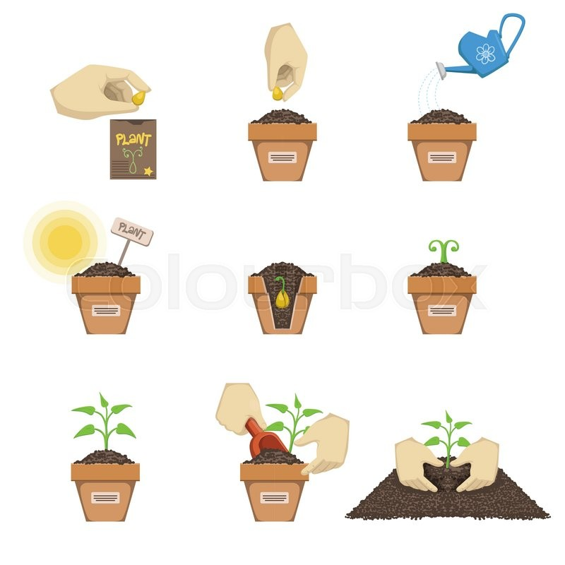 800x800 Planting The Seed Sequence Cartoon Simple Style Flat Vector