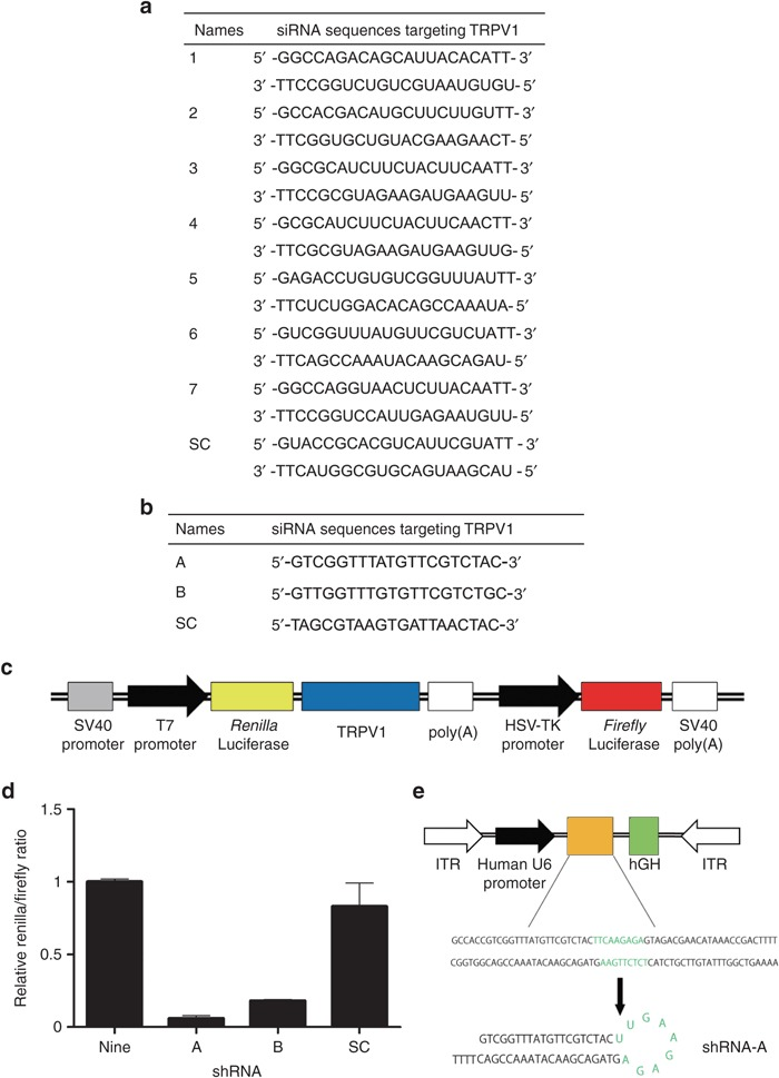 700x969 Selection Of Sirna E Sequence For Insertion Into The Aav9 Vector