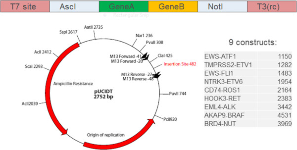 600x303 Vector Design The Gene Sequence Was Synthesized By Idt And