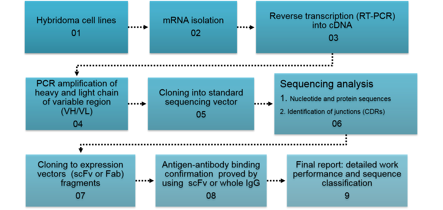1450x688 Vector Sequencing ~ Frames ~ Illustrations ~ Hd Images ~ Photo