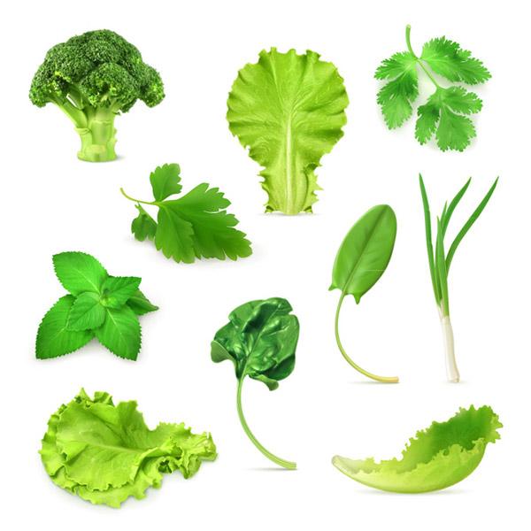 600x600 Vector Vegetable Free Vector Vegetable Download