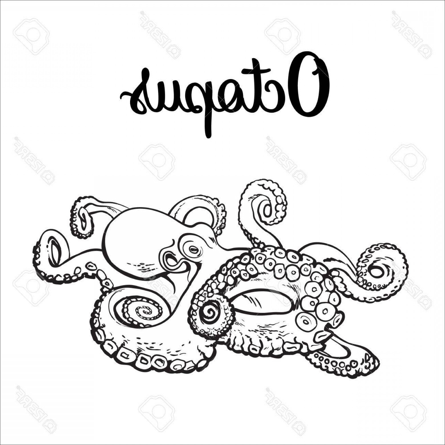 1560x1560 Photostock Vector Live Octopus Sketch Style Vector Illustration
