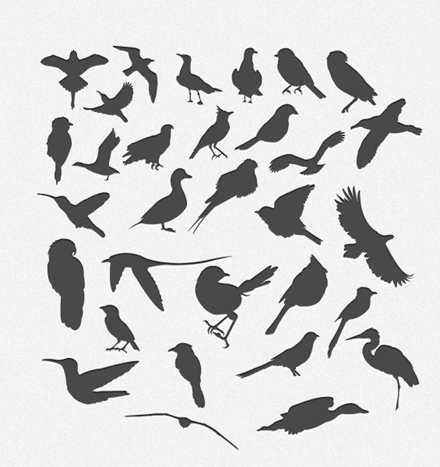 620x658 30 Bird Silhouttes Pack Vector