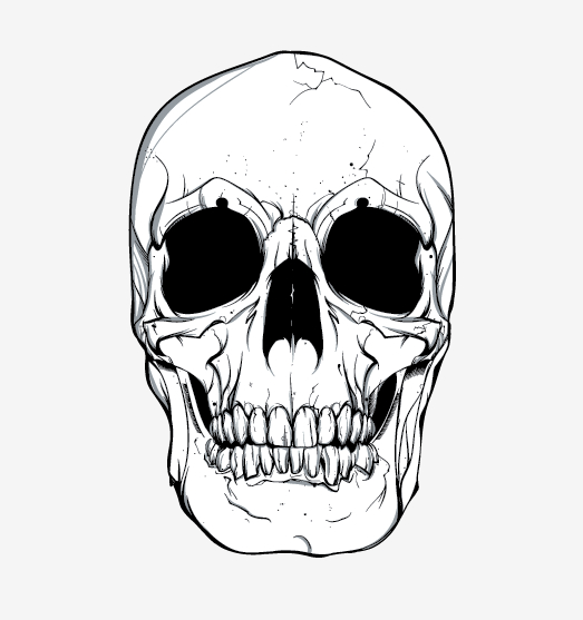 523x557 Skull Vector Skull Vector Free Vector Site