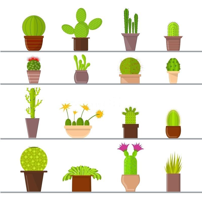 800x800 Cactus Plant Cartoon Cactus Lazy Drawing Gardeners Supply Coupon