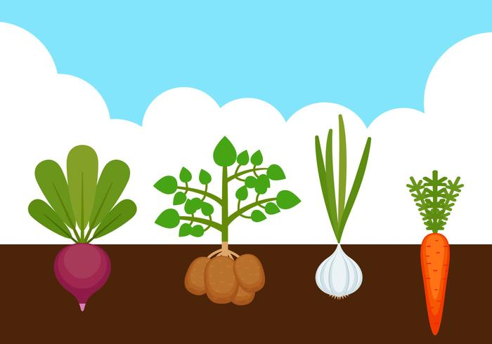 700x490 Outstanding Vegetable Garden Vectors