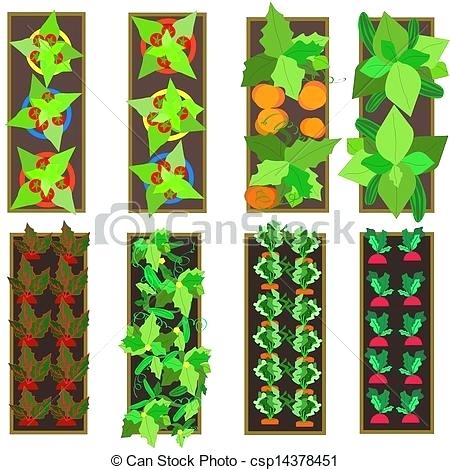 450x470 Vegetable Garden Design Drawing Raised Gardens Vector Gardenia