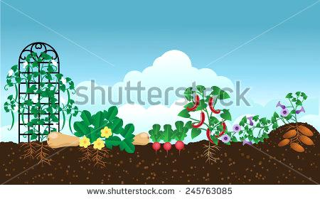 450x280 Vegetable Garden Pictures Free Vegetable Garden Free Vector