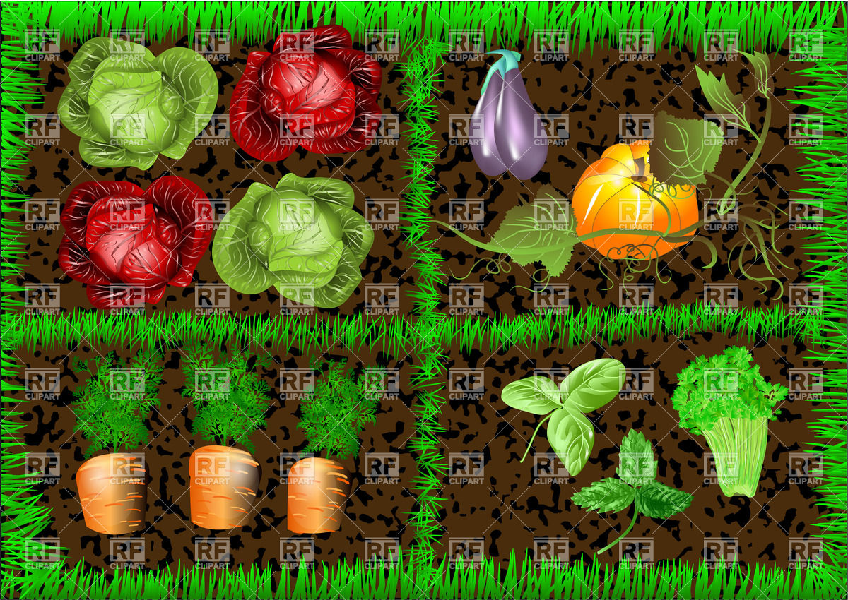 1200x850 Vegetable Garden Vector Image Vector Artwork Of Food And