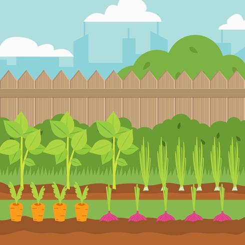 490x490 Vegetable Garden Vector Illustration