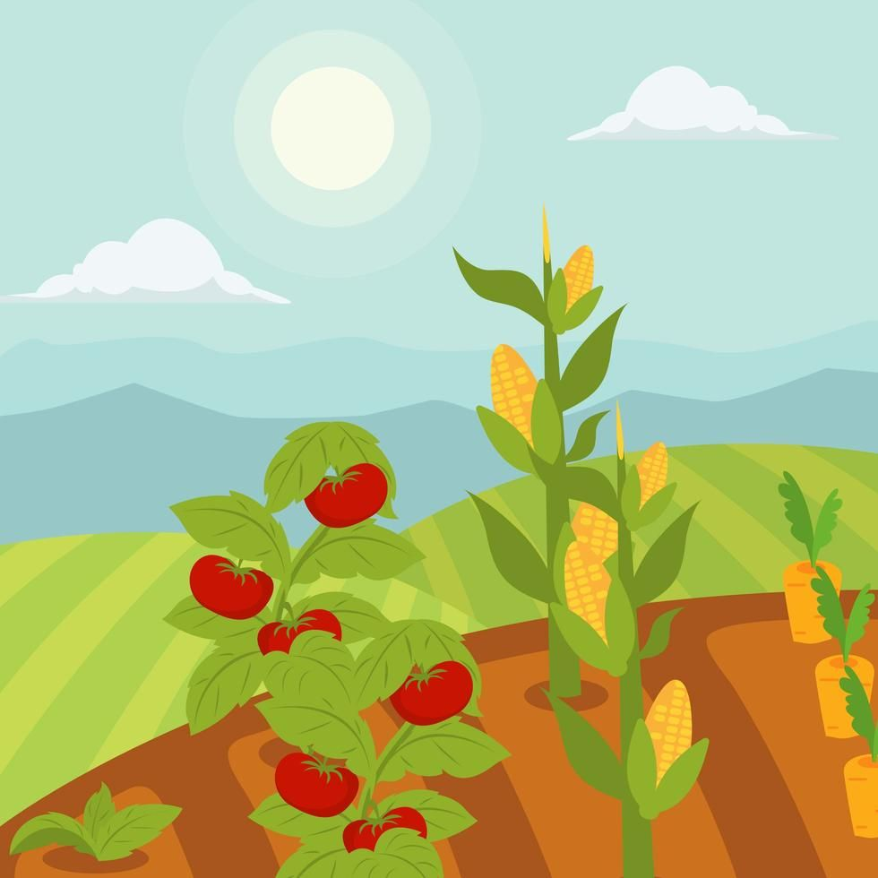 980x980 Vegetable Garden Vector Illustration In 2018