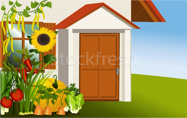 600x380 Vegetable Garden Vector Illustration Jagoda ( 2510341) Stockfresh