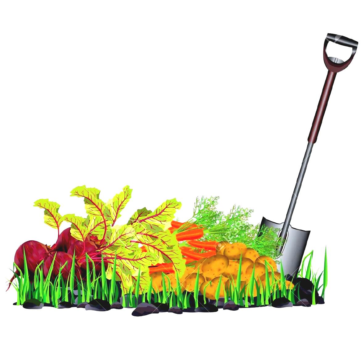 1170x1170 Vegetables Clipart Vegetable Patch